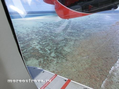 коралловый риф под водой